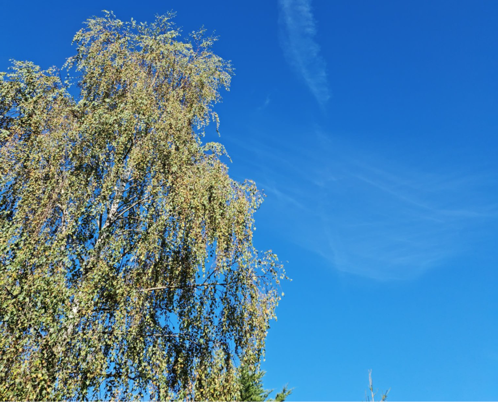 Ciel bleu soleil Météo Lor'